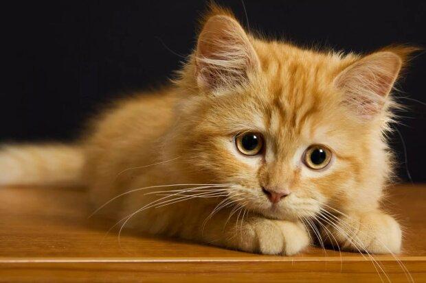 Wie Katzen Stress erleben und wie sie ihnen helfen können