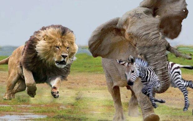 """""""Pfote der Hilfe"""": Tiere retten einander. Fälle, die vor der Kamera gefilmt wurden"""