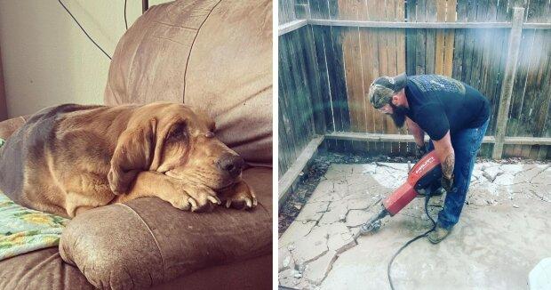 Die Besitzerin nahm einen Hund aus dem Tierheim, das nie einen eigenen Hof hatte. Und eines Tages überraschte sie ihn