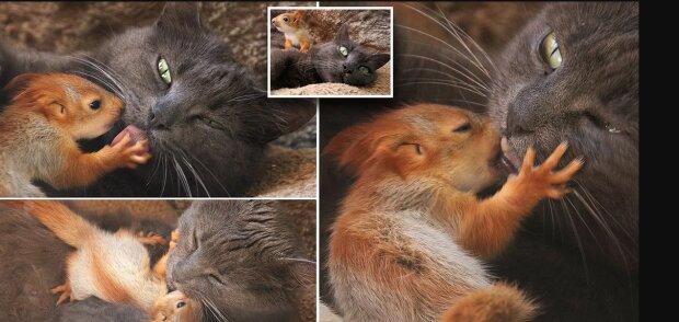 Die Katze schützte vier kleine Eichhörnchen, die eine Mutter brauchten