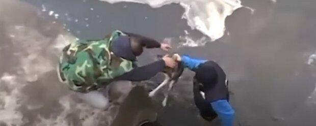 Männer zogen einen streunenden Hund aus dem Eiswasser: der Dankbarkeit waren keine Grenzen gesetzt