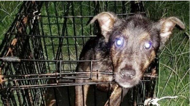 Der Hund saß in einem geschlossenen Käfig und daneben stand eine Notiz