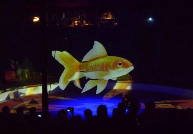 Mit Sorge für Tiere: Deutscher Zirkus Roncalli verwendet für Vorstellungen Hologramme statt Tiere