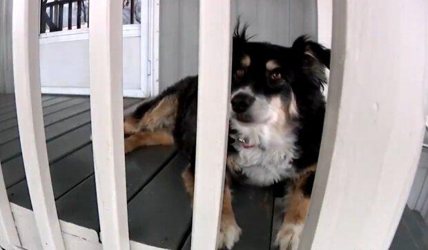 Hund erbt die fünf Millionen seines Besitzers, Details