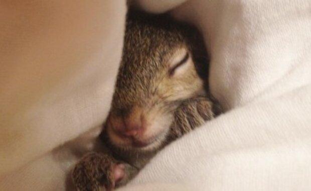 Ein Mann vergaß, das Fenster zu schließen, und als er nach Hause kam, fand er eine winzige Kreatur auf seinem Kissen