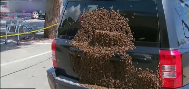 Bienen verfolgten die Autos der Frau. Quelle: Youtube Screenshot