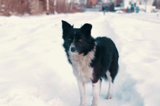 Mischlingshund. Quelle: Screenshot Youtube