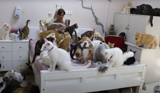 Eine Frau hat 480 Katzen und 12 Hunde: Sie erzählte, wie sie mit ihnen zurechtkommt