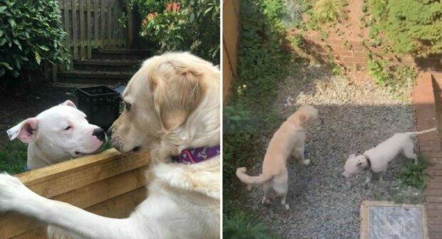 """""""Flauschige Liebe"""": zwei Hunde, die nebeneinander wohnen, verehren sich gegenseitig"""
