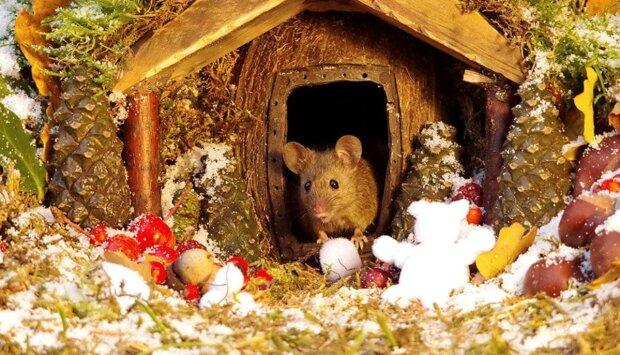 Der Mann fand Mäuse in seinem Hof, aber er hat sie nicht hinausgeworfen, sondern ein Dorf für sie gebaut