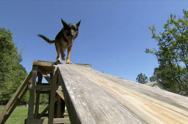 Hero, Hund. Quelle:Screenshot YouTube