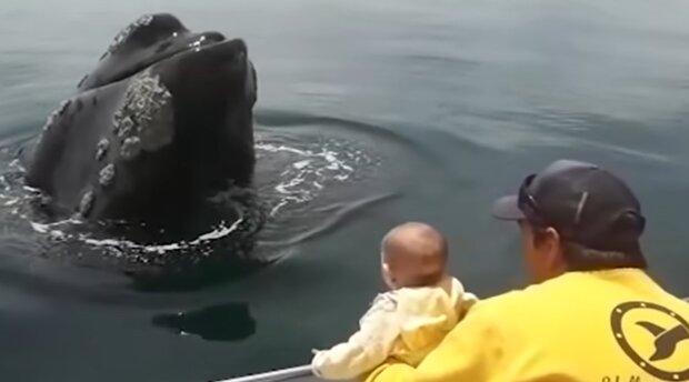 Begegnung mit einem Wal. Quelle: YouTube Screenshot
