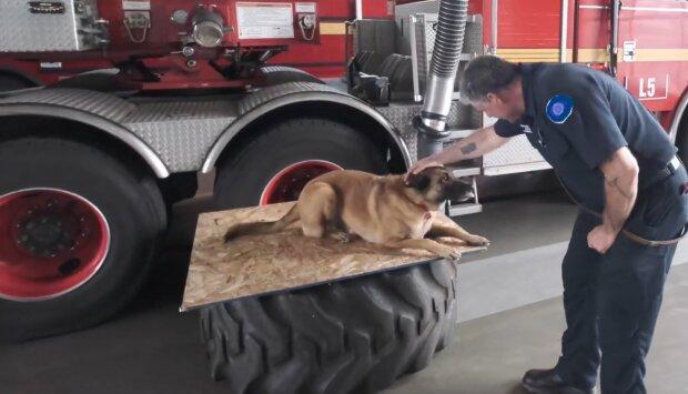 Feuerwehrhund. Quelle: YouTube Screenshot