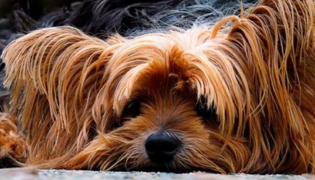 Wissenschaftler aus Ungarn haben ein Gen für die Langlebigkeit von Hunden untersucht, das es ihnen ermöglicht bis zu 27 Jahre alt zu leben
