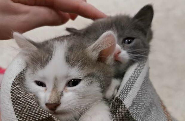 Babys sind sicher und warm. Quelle: Screenshot YouTube
