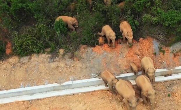 15 Elefanten. Quelle: YouTube Screenshot