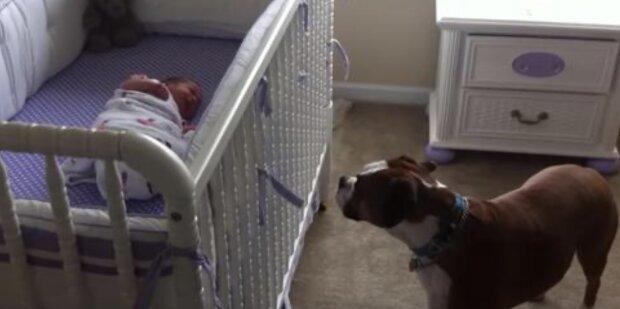 Säugling und Hund. Quelle: apost.com