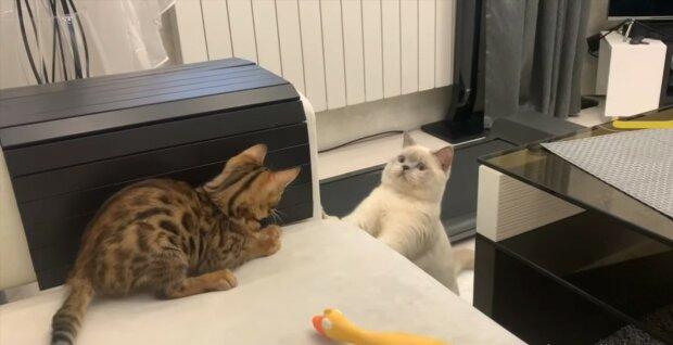 """""""Ein sanftes Treffen"""": Das Kätzchen bekam kleine """"Schwester"""""""