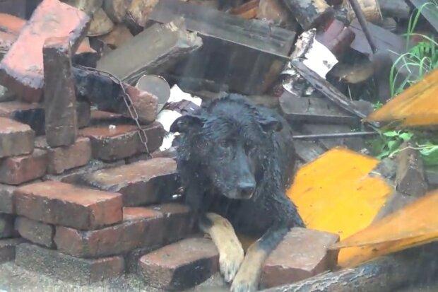 Glücklicher Zufall für ein bedürftiges Tier. Quelle: Screenshot YouTube
