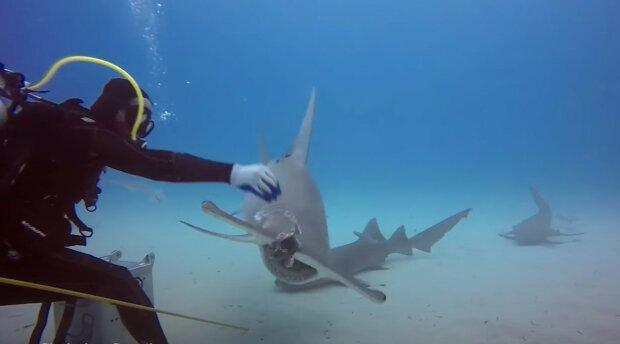 Wie füttert man einen großen Hai und wird nicht selbst zur Vorspeise