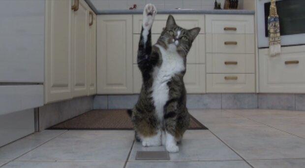Die klügste Katze der Welt. Quelle: Screenshot YouTube