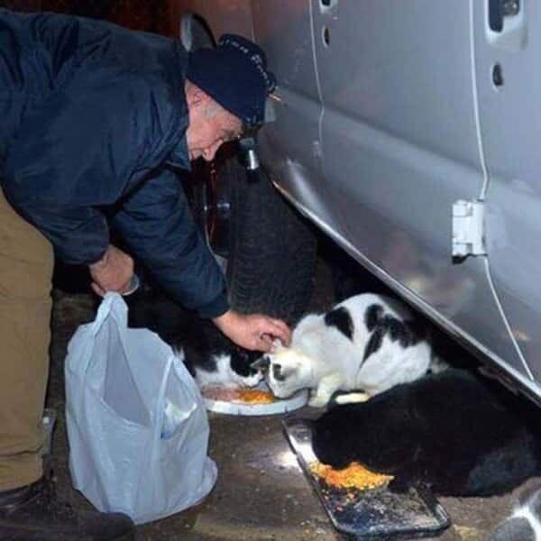 22 Jahre Respekt: Der Schrottsammler füttert jeden Tag alle Katzen in der Region