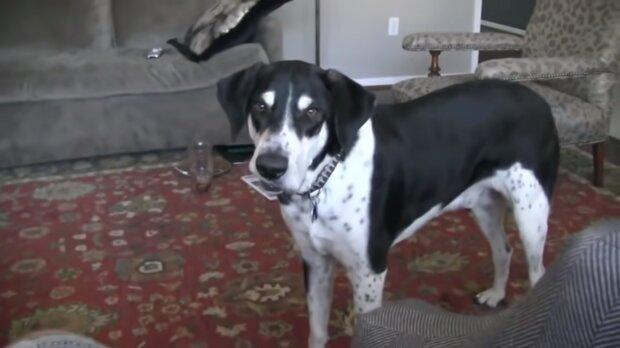 Sprechender Hund. Quelle:Screenshot YouTube