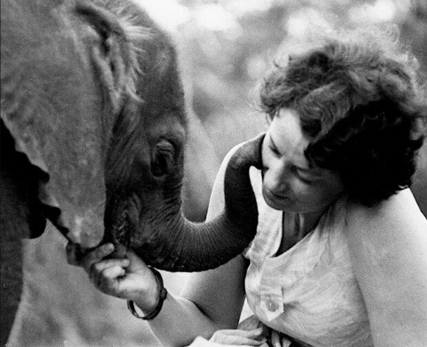 Eine Geschichte der echten Freundschaft zwischen Mensch und Elefanten