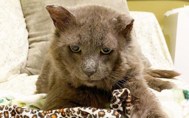Die alte Katze. Quelle: goodhouse.com