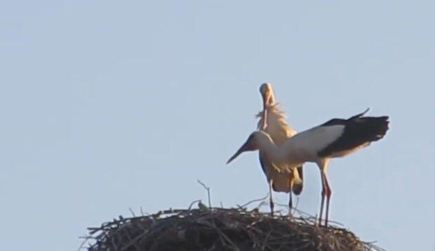 Familie Storch. Quelle: YouTube Screenshot