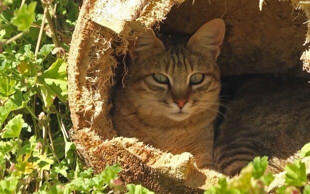 Liebevolle Mutter: Eine Katze saß die ganze Nacht vor der Tierklinik und suchte nach ihren Kätzchen