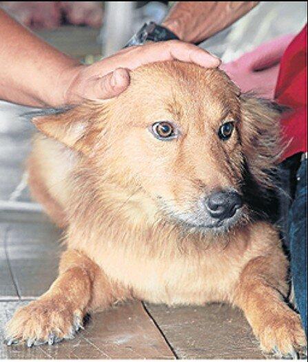 Echter Held: Ein Hund hat einem Baby das Leben gerettet, das auf einer Mülldeponie zurückgelassen wurde