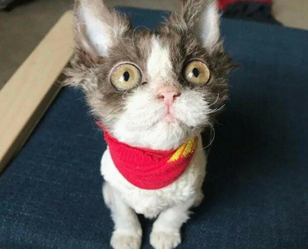 Die Geschichte von Appa, besonderer Katze, die niemand aus dem Tierheim mitnehmen wollte