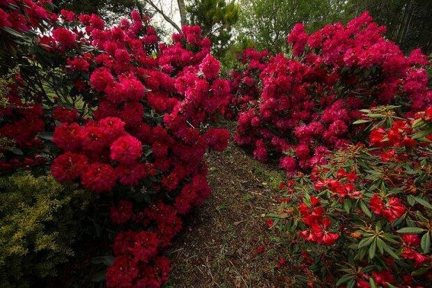 Bezaubernder Garten in Neuseeland