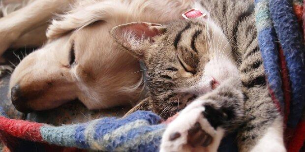 Es stellt sich heraus, dass sie Freunde sind: Eine versteckte Kamera filmte, was eine Katze und ein Hund tun, wenn ihre Besitzer weg sind