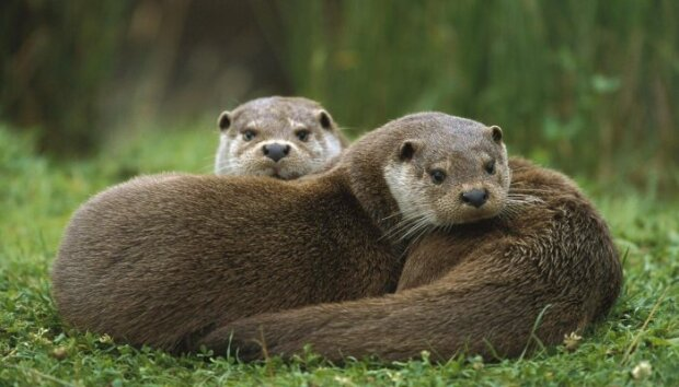"""""""Ich ging auf die Knie, und dann tauchten sie auf"""": die Otterfamilie hinderte den Junge daran, seiner Freundin den Heiratsantrag zu machen"""