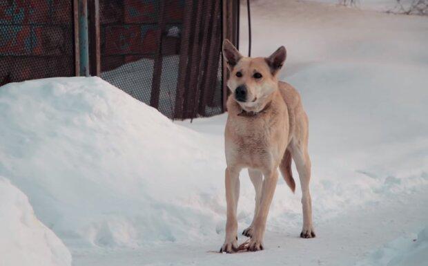 Der Hund. Quelle: Screenshot YouTube