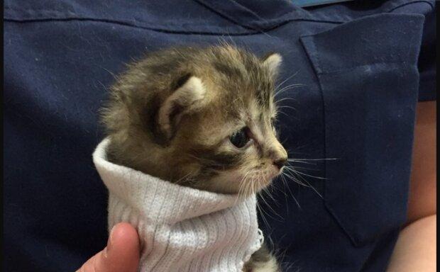 Gerettetes Kätzchen. Quelle: YouTube Screenshot