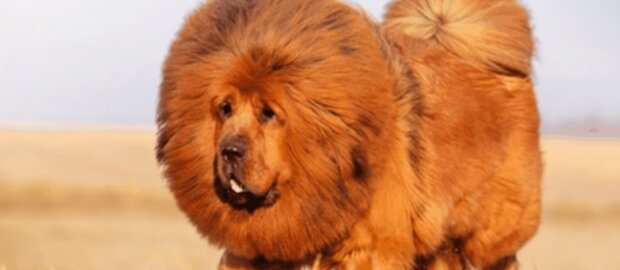 Zotteliger Hund. Quelle: Screenshot YouTube