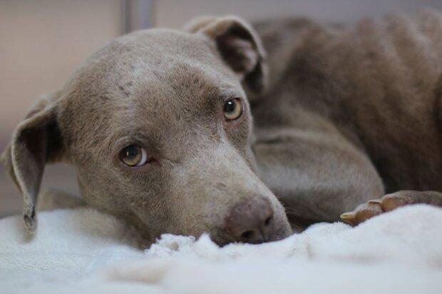 Der Tierarzt aß im gleichen Tiergehege mit dem Hund, um sein Leben zu retten