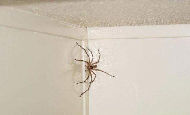 Im bett spinnen Weiße Spinnen