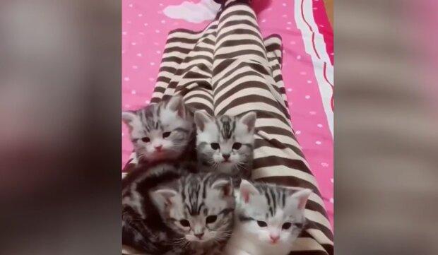 Kleine Kätzchen. Quelle: YouTube Screenshot