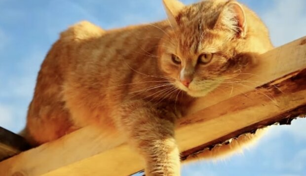 Rothaarige Katze. Quelle: Screenshot YouTube