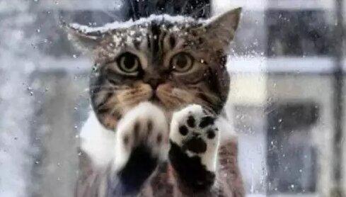 Um Hilfe bitten: Die Katze kam zu einem Café und fing an, die Fenster zu kratzen und zu miauen