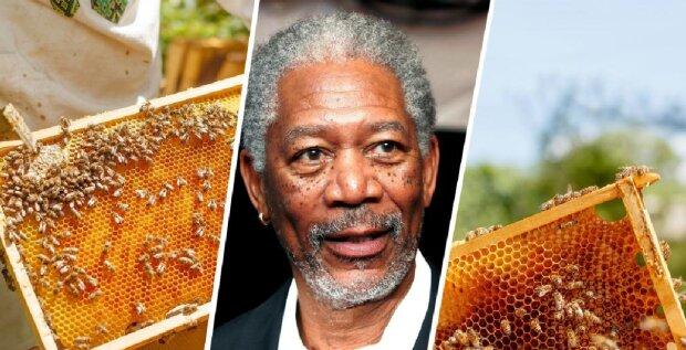 Hollywood-Schauspieler Morgan Freeman hat Bienen auf seiner Ranch untergebracht, Details