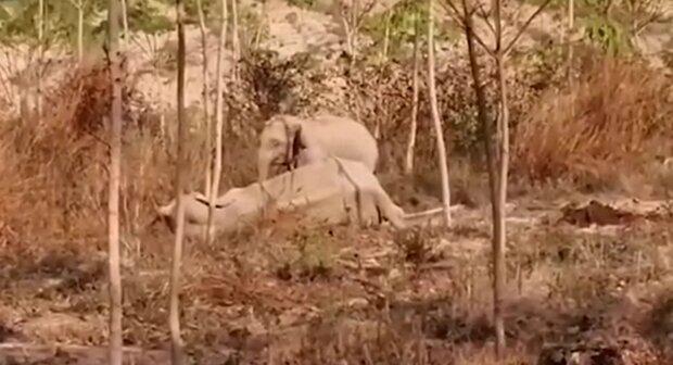 Kleiner Elefant und Elefantine. Quelle: YouTube Screenshot