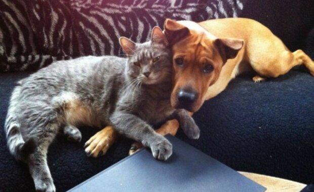 Wahre Liebe: Katzen, die sich in Hunde verliebt haben