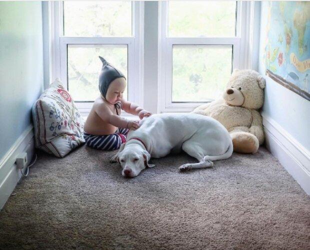 Wahrer Freund: ein Hund, der vor schlechten Besitzern gerettet wurde, hatte Angst vor allen außer einem elf Monate alten Baby