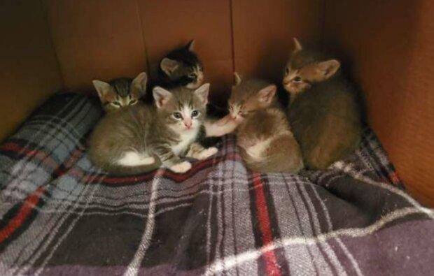Wie eine streunende Katze ihre Kätzchen der Frau zeigte, die sie fütterte