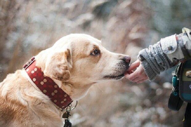 Hunde haben einen sechsten Sinn. Es ist besonders ausgeprägt in Bezug auf Menschen